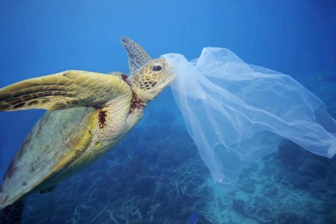 sobrevivir sin plastico